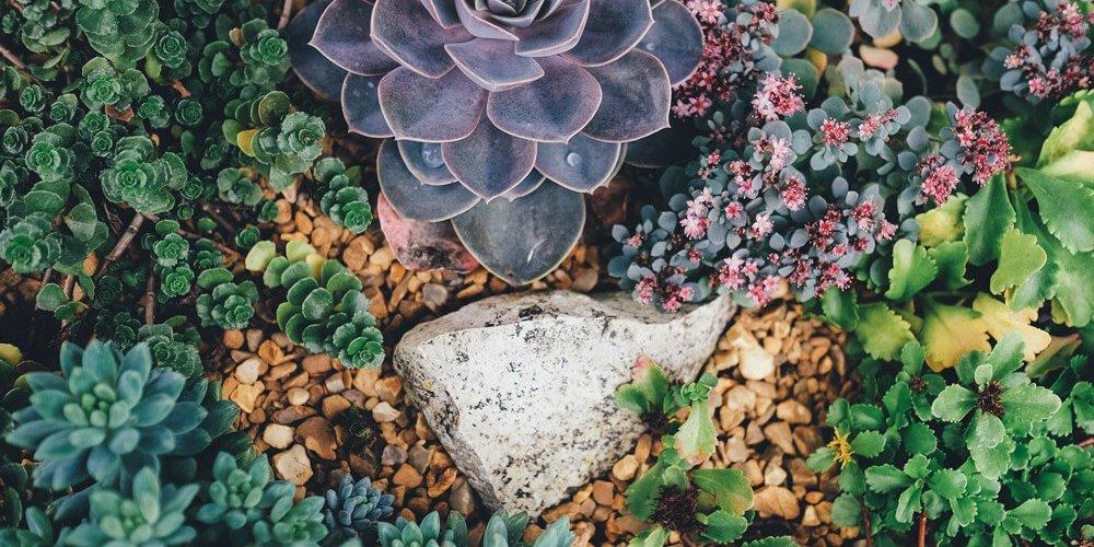 Trockener Charme im Sukkulenten-Garten