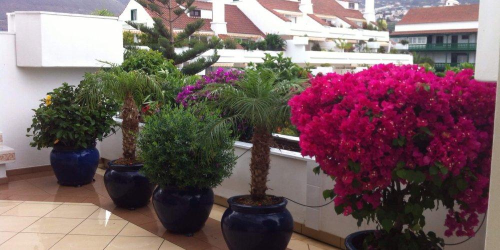 Meine Terrassen-Oase auf Teneriffa
