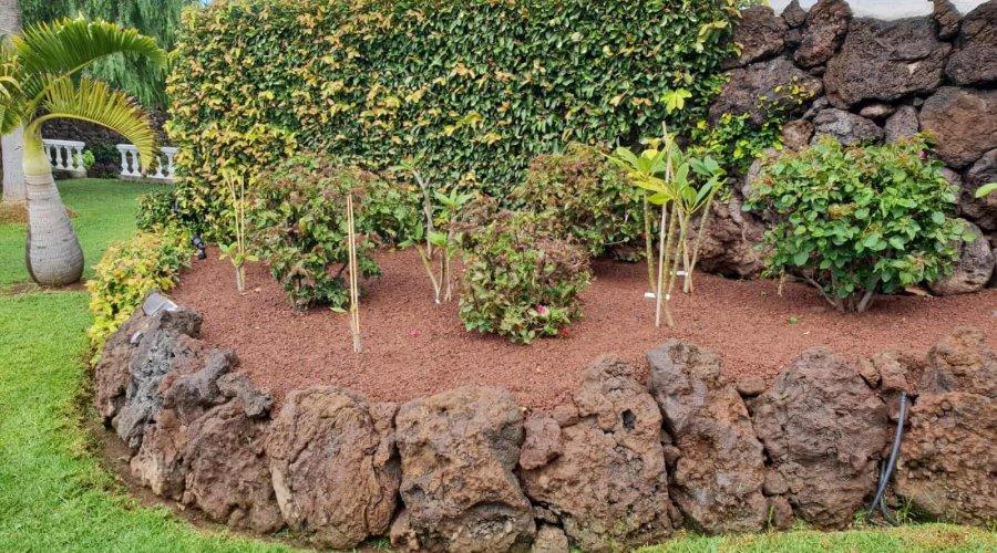 Mein Pflanzenparadies auf Teneriffa