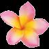 Exotische Blütenpracht mit Franchipani