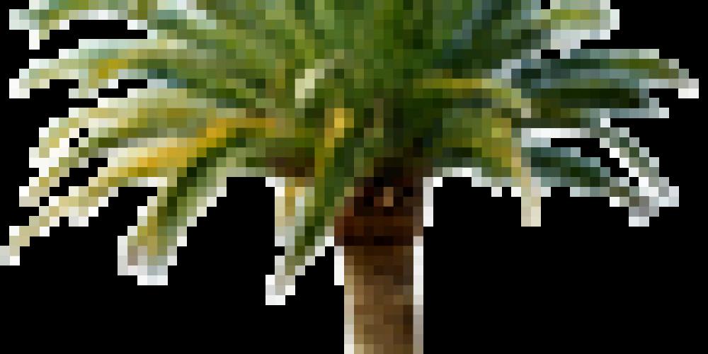 Palmengarten-Paradies auf Teneriffa