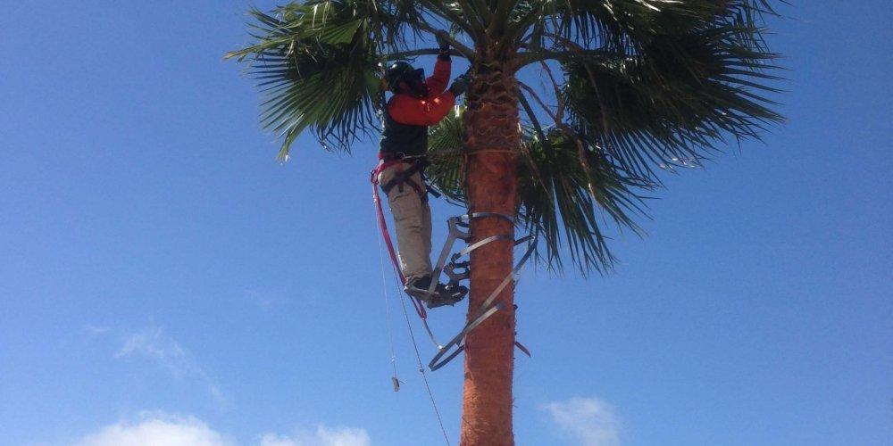 Jetzt ist Palmenzeit