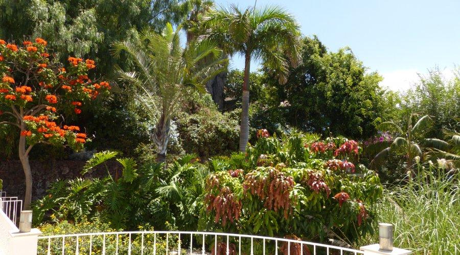 Como fertilizar el jardín?
